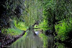 Les hortillonnages (didier95) Tags: riviere vert reflet vegetation arbre amiens picardie hortillonnages hautsdefrance