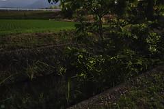 20160618-DS7_6694-6696-3.jpg (d3_plus) Tags: street sky plant mountains nature field japan bug nikon scenery nightshot dusk illumination daily  streetphoto nightview 28105mmf3545d toyama nikkor ricefield     dailyphoto  riceplant  28105 lightdisplay     28105mm   zoomlense        28105mmf3545 toyamapref d700 281053545 nikond700  aiafzoomnikkor28105mmf3545d  28105mmf3545af photoshopcc sankyovillage aiafnikkor28105mmf3545d