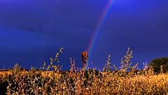 The calm after the storm. (Gurutx) Tags: blue sunset azul arcoiris atardecer rainbow cereal paz campo trigo serenidad tierraestella