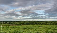 Sutton Park  M6251156_7_8sm (Preselector) Tags: suttonpark bioblitz
