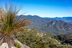 Grass tree and Mt May (NettyA) Tags: winter moon mountain landscape australia bushwalking qld queensland bushwalk grasstree 2016 mainrange xanthorrhoea scenicrim mtmaroon seqld mtbarneynationalpark mtmay sonya7r