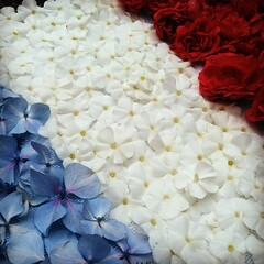 Flag France (FloLfp) Tags: flowers france rose rouge frankreich euro flag bleu francia blanc flore drapeau frankrike hortensia 2016 法國