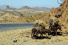 Adi Tekliezan (Eritrea) - Kebesa landscape (Danielzolli) Tags: eritrea  ertra erythre  erythrea  eritra habesha anseba  zobaanseba regionanseba  landschaft pejsaz paysage landscape paisaje   kebesa kebessa hochland highland esel burro donkey osel ne aditekliezan habrenqaqa balwa
