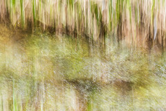 NET OF INDRA (Deborah Hughes Photography) Tags: abstract art water weeds icm intentionalcameramovement