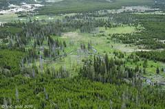 Overlook view (V. C. Wald) Tags: yellowstonenationalpark uppergeyserbasin biscuitbasin mysticfalls mysticfallsoverlook