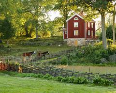 Stensj I (Gustaf_E) Tags: red horse house by forest landscape woods sweden smland skog sverige hus sommar morgon landskap rtt rd hst stensjby stensj landsbygd