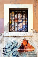 "Roma. Trastevere. Street art. Freely inspired by Andrea Mantegna - ""Sacra Famiglia con una santa"" for #iononmilasciofregare by Tina Loiodice. And a butterfly by... (R come Rit@) Tags: italia italy roma rome ritarestifo photography streetphotography streetart arte art arteurbana streetartphotography urbanart urban wall walls wallart graffiti graff graffitiart muro muri streetartroma streetartrome romestreetart romastreetart graffitiroma graffitirome romegraffiti romeurbanart urbanartroma streetartitaly italystreetart contemporaryart artecontemporanea farfalla butterfly tinaloiodice iononmilasciofregare project iwontgetscrewedover museocivicodicastelvecchio castelvecchiomuseum castelvecchio museum museo verona stolen17worksofgreatvalue stolenworks stolen freelyinspired andreamantegna sacrafamigliaconunasanta moth falena trastevere"