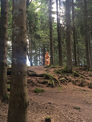 MUMMELSEE (Alejandro Medina) Tags: selva negra mummelsee schwarzwald alemania deutschland