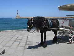 20160709_002 (a1pha_gr) Tags: greece crete chania      sea sky  animal      lighthouse pidgeon horse carriage waterfront  port
