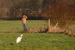 Encounter (martinstelbrink) Tags: bird germany sony sigma walker nrw tele hiker magpie nordrheinwestfalen greategret vogel elster spaziergnger silberreiher standardrunde standardwalk sigma120400mmf4556 a77ii a77m2 alpha77ii