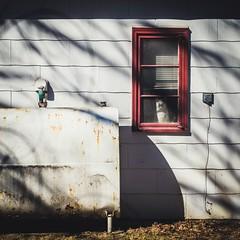 neighbor cat (Jen MacNeill) Tags: windows shadow red house window cat square friend shadows tank squareformat oil neighbor treeshadows notyourusualstilllife littledoglaughedstories