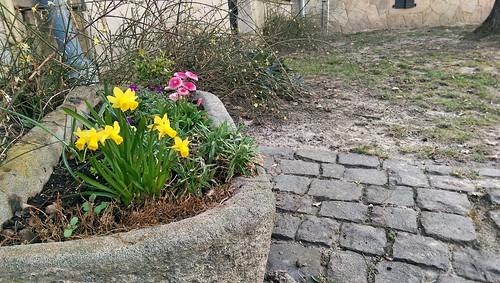 Frühling vor Weingut und Gutsschänke Wilmshof, Selzen