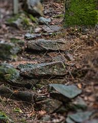 stepping stones (Birgit F) Tags: park norway lensbaby norge moss spring kristiansand vår selectivefocus mose vestagder ravnedalen edge80