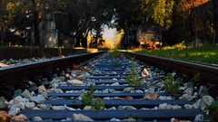 Parallel lines meet at infinity... (Michael Kalognomos) Tags: sunlight graveyard station train gold dawn rail parallel abandonment