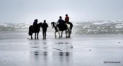 29-03-2015 Surreal (Niki Roberts) Tags: horses beach treasure surreal 74 hunt ferring no86 115picturesin2015 imstillingstanding 2015th74