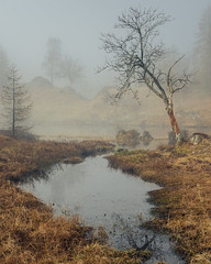 Twisted Rowan III, Holme Fell Tarn (colinbell.photography) Tags: