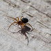 A Very Tiny Spider