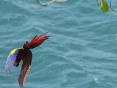 hula hoop sat 037 (Learn, Love, Conserve) Tags: hulahoop saprissa puntaleona feriaverdearanjuez