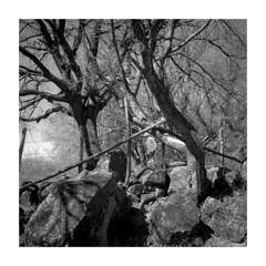 Rolleiflex_003 (dcanalogue) Tags: classic 6x6 tlr film rollei rolleiflex zeiss vintage square landscape countryside fuji country carl fujifilm medium format neopan 100 filmcamera rodinal planar acros f35 35f wlf adonal analogicait
