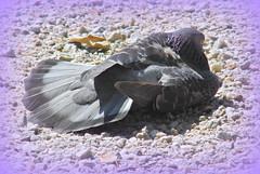 Pigeon Holing! ('cosmicgirl1960' NEW CANON CAMERA) Tags: park travel costa bird sol del spain holidays pigeon espana andalusia marbella benalmadena yabbadabbadoo