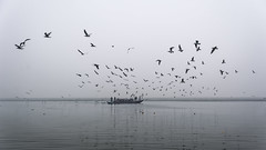 The bird is powered by its own life and by its motivation. - A. P. J. Abdul Kalam (ayashok photography) Tags: india birds river asian boat nikon asia ride seagull indian crowd group desi varanasi pilgrim bharat ganga ganges bharath desh barat cwc northindia uttarpradesh pilgrimages barath 2013 nikkor24120mmvr nikonstunninggallery ayashok nikond700 ghatsofvaranasi chennaiweekendclickers ayashokphotography ayp0546