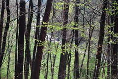 Der Herr ist erstanden (amras_de) Tags: las primavera les forest spring selva bosque skog jar prima bos lente wald floresta printemps vor mets forêt silva tavasz metsä ver frühling ware vår bosc jaro foresta wiosna skov baso forår kevad primavara pavasaris orman erdo württemberg leinfelden kevät udaberri skógur ilkbahar šuma padure gozd foreste proljece printempo earrach pomlad arbaro miškas mežs bësch bòsc foraois fréijoer guddefi