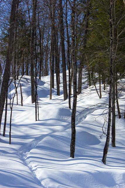 Sentier enneigé - Snowy path