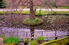 peering down (pumobelix) Tags: wall canon eos superia lucca waterlilies botanico fujifilm giardino lakemirror giardinobotanico