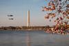 Apocalypse Now (Seb & Jen) Tags: usa flower fleur cherry washington districtofcolumbia unitedstates blossom basin obelisk tidal cerisier obelisque étatsunis