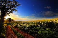 See that glow (Idreamofpies) Tags: flowers blue sunset france tree field grass yellow rural canon landscape countryside spring twilight flora track day glow sundown dusk path burgundy rapeseed nievre burgogne corbigny idreamofpiesphotography
