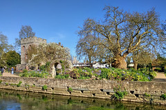 The Tower House, Westgate Gardens, Canterbury (Aliy) Tags: tree tower gardens river garden kent cathedral canterbury towerhouse stour hugetree westgategardens