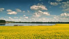 landscape (augustynbatko) Tags: sky lake nature yellow clouds landscape rape