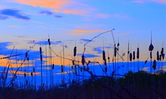 The Marsh IV (Josh Rokman) Tags: nature outdoors nikond7000 swamp marsh forest sunset natural sun gold golden