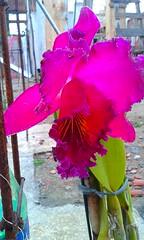 20150725_164107 - Cpia (Megaolhar) Tags: flores toy flickr do dia vale paulo apa bom inverno so campos facebook tuka jordo paraba fazendinha 2016 youtube ibama twitter jardinagem bioma gomeral
