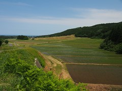 rice field in the slope (murozo) Tags: sky green field japan rice 日本 空 緑 akita 秋田 田んぼ 水田