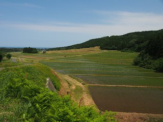 rice field in the slope
