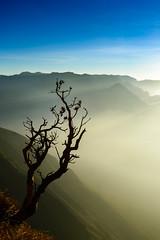 On the look out (Nagesh Kamath) Tags: sunrise munnar clubmahindra kolukkumalai nikond600 sigma240700mmf28 clubmahindramunnar