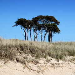 Beach trees (fabiankoppers) Tags: blue trees sky plant tree beach nature grass square landscape seaside sand horizon gray meadow shore minimalism tone simplistic