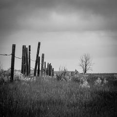 Fence to nowhere (jeremyrebeccacarter) Tags: blackandwhite tree clouds vintage fence farm prairie grassland albera