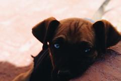 (jazcorona) Tags: dog littlebaby baby eyes ojos diferente
