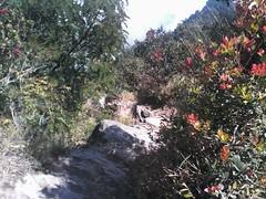 "Pengembaraan Sakuntala ank 26 Merbabu & Merapi 2014 • <a style=""font-size:0.8em;"" href=""http://www.flickr.com/photos/24767572@N00/27162988545/"" target=""_blank"">View on Flickr</a>"