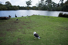 Untitled (Kohei Hasegawa) Tags:  pentaxda 21mm f32 auckland newzealand pentaxda21mmf32