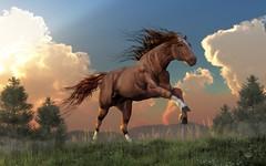 Running Free (deskridge) Tags: runningfree secretariat horse thoroughbred equestrian chestnut brown dun socks racehorse race gallop run running galloping animal wildlife wild mane tail western stallion mustang danieleskridge eskridge
