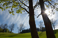 Twin Trees (stefanielaiminger) Tags: twin weitwinkel sun sonne esche ahorn acer