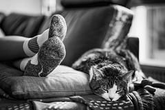 Cozy (gambajo) Tags: sleeping blackandwhite pet animal socks comfortable cat blackwhite cozy kitten sleep sox kitty couch sofa sleepy lazy idle cosy comfy laze snugly cozily