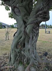 cool tree (gwilli) Tags: animated gif wiggly japan japan2014 sakurajima