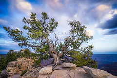 Tree at Angel Bright North Rim (Jerry Fornarotto) Tags: arizona beautiful butte canyon clounds coloradoriver dawn desert destinations dusk erosion formations geological grandcanyon grandcanyonnationalpark hiking horizon jerryfornarotto landscape magnificent morning nationalpark nature np outdoors outside rim river scenery scenic sky southrim southwest sunrise terrain travel tree vivid west western wilderness