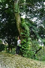P1020035 (Mayan_princess) Tags: chiapas argovia finca resort caf coffee kaffee paraso paradise vegetacin vegetation verde green ro river spa relajacin relax forest selva orgnico autosostenible