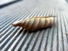 Leaf on lines (Zandgaby) Tags: leaf line lines symmetrical wood
