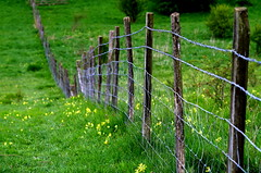 The fence and the wildflower meadow. (pstone646) Tags: plants green nature field yellow fence downs landscape kent flora dof meadow wildflowers